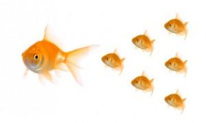 fish_training