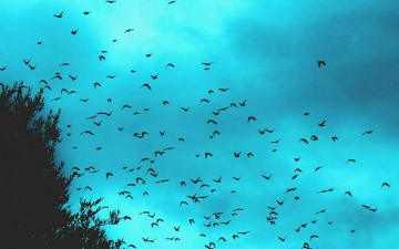 A Murmuration of Starlings – working together to drive improvement